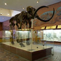 Moscow Paleontological Museum